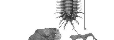 #EESPublishes: 1st Year #HarryMaischIV on #Trilobite bearing #erratics